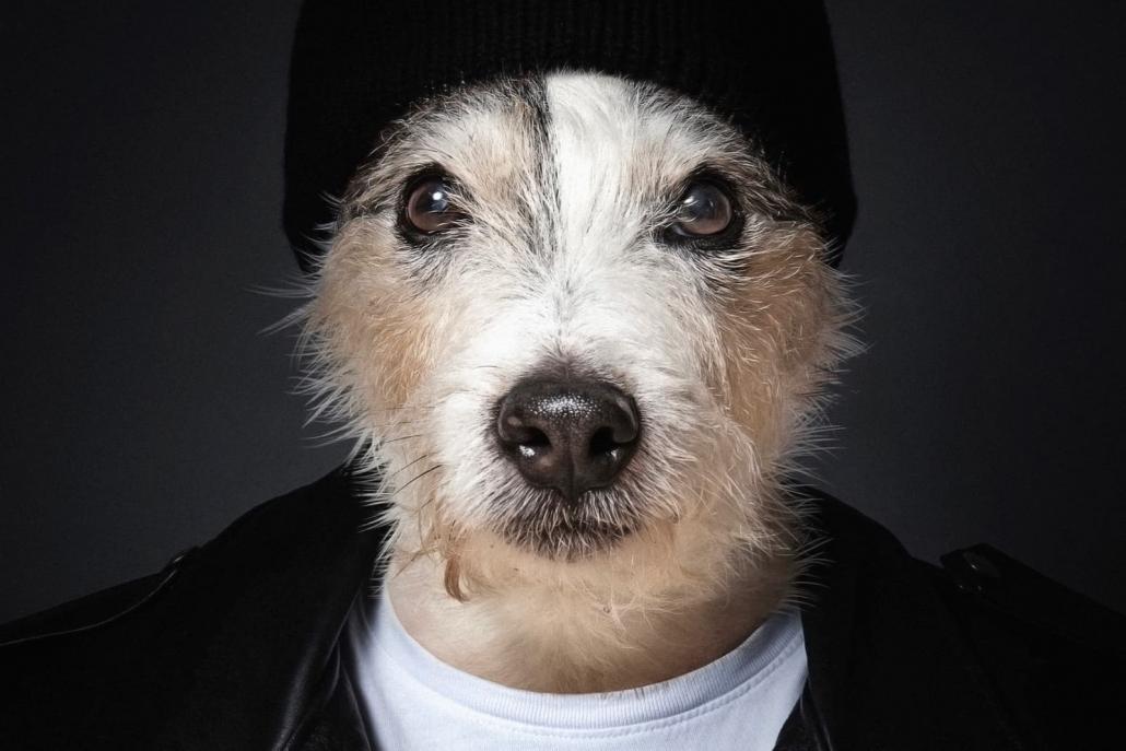 Skip The Dog | Praktikabel